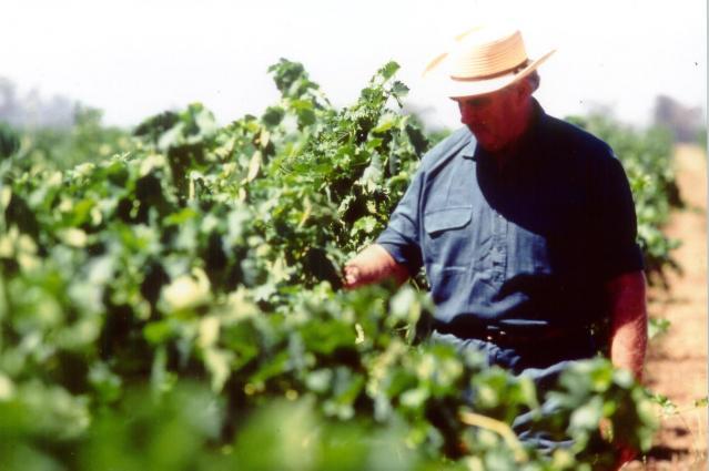 Malcolm Campbell vineyard