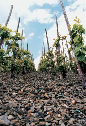 Slate Soils in the Vineyards