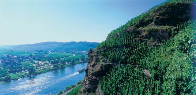 Vineyards overlooking the water