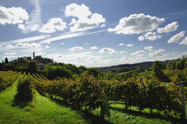 Zardetto Vineyard Image 1