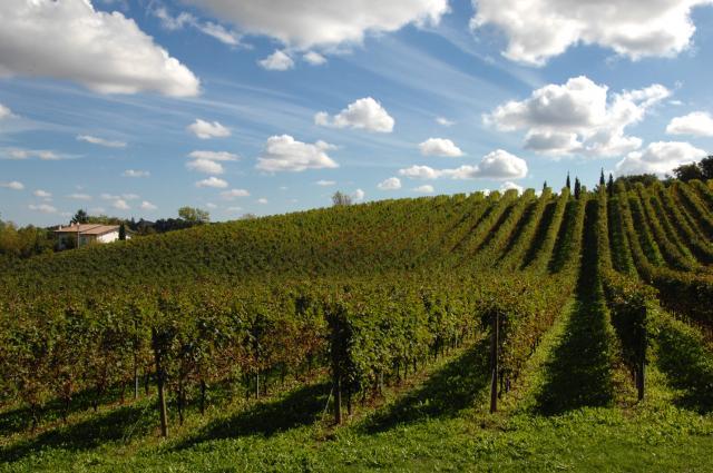 Zardetto Vineyard Image 2