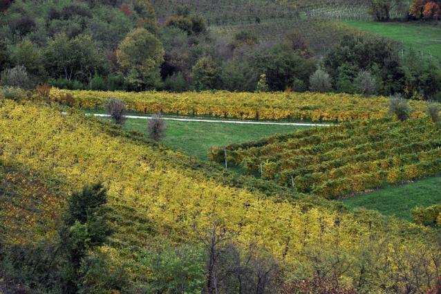 Zardetto Vineyard Image 3