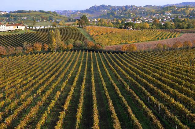 Zardetto Vineyard Image 4