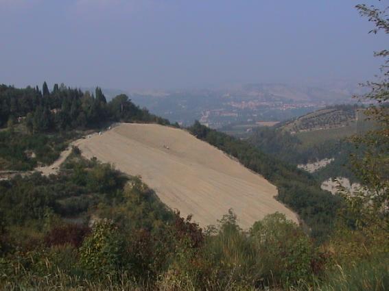 Castelluccio Vineyard