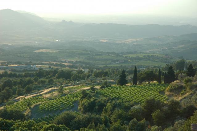 Galardi Vineyard