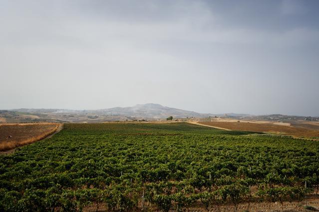Morgante Vineyards