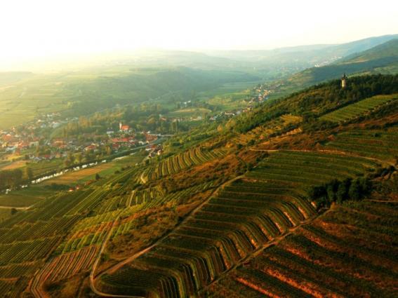 Loimer Vineyards