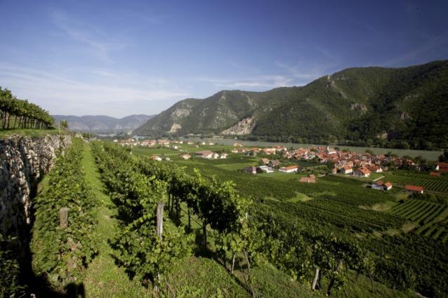 Rudi Pichler Vineyards