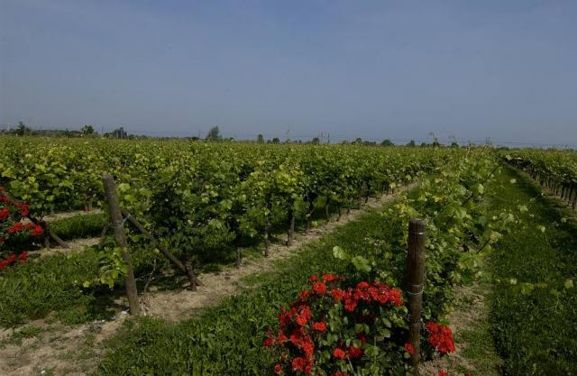 Zenato Vineyards