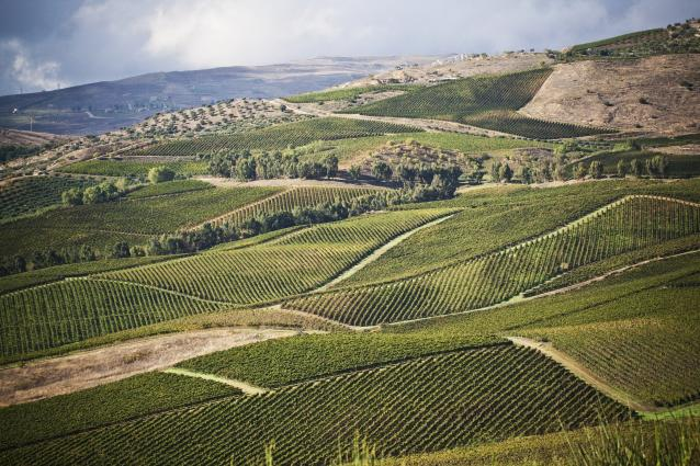 Regaleali Vineyards