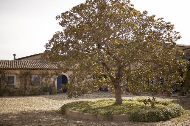 Regaleali Estate Courtyard