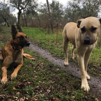 Bisceglia Dogs, Malbec and Vulcano