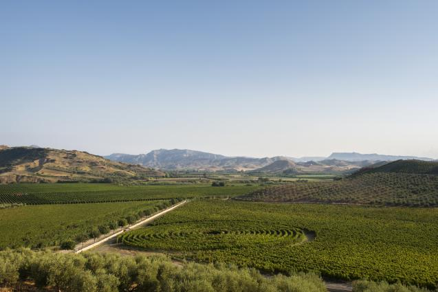Librandi, Rosaneti Vineyards with the collection of native varieties in the middle
