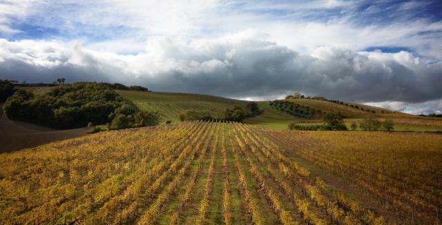 Pievalta Vineyard