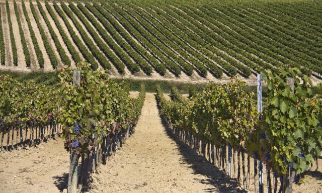 Valdipiatta Vineyards