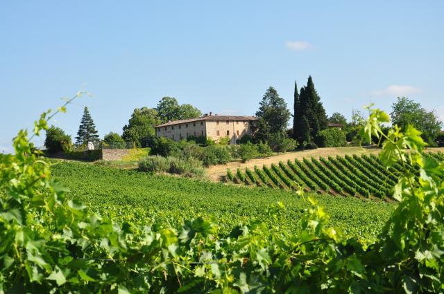 Castello di Bossi Winery