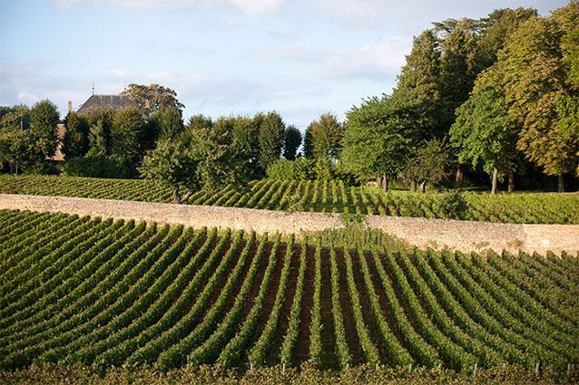 Domaine Tollot-Beaut Vineyard