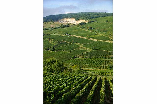 Domaine Alain Chavy Vineyards