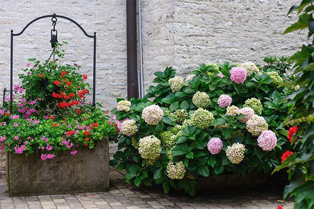 Domaine Blain-Gagnard Flowers