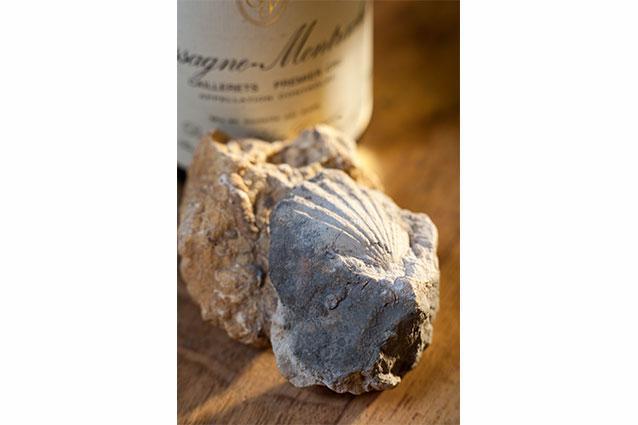 Domaine Blain-Gagnard & Fossils