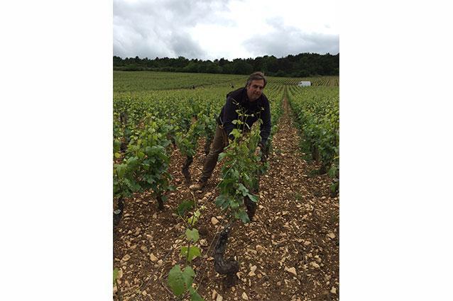 Xavier Monnot in the Vineyard