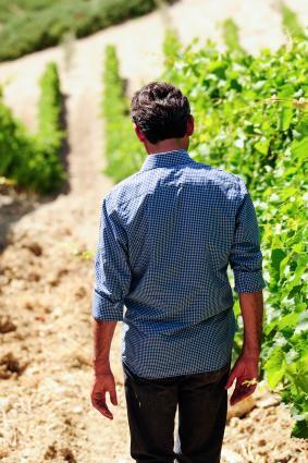 Don Antonio walking the vineyard