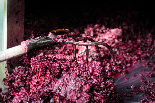 Morgante Grape Skins
