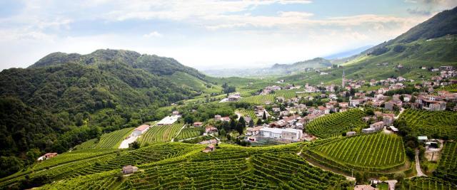 Marsuret Vineyards