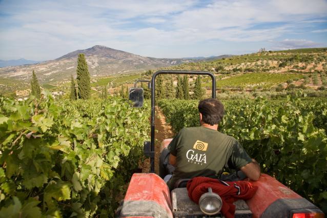 GAI'A Nemea Vineyards