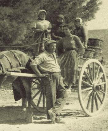 Yiannis Papagiannakos Harvest 1955