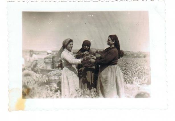 Papagiannakos Women Harvest 1950
