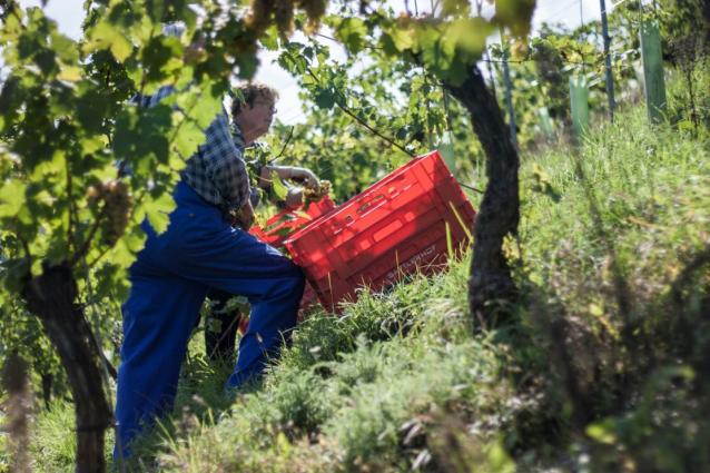 Sattlerhof Harvest