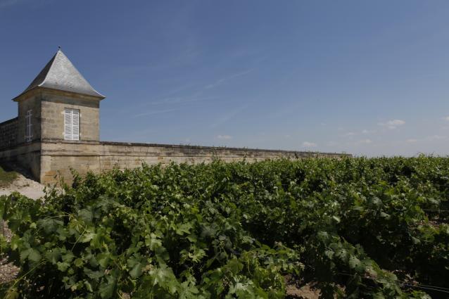 Beau Site vineyard