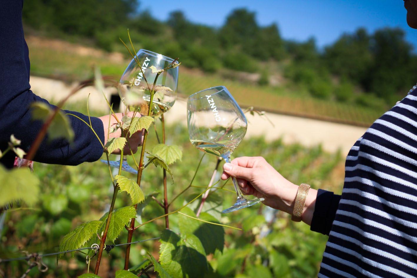 Chanzy Vineyards