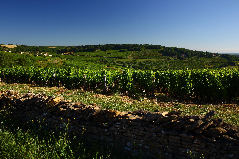 Henri Champliau Vineyards