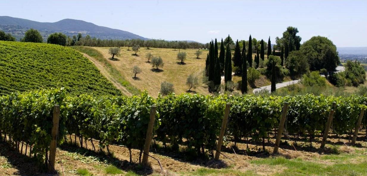 Falesco Estate and vineyards