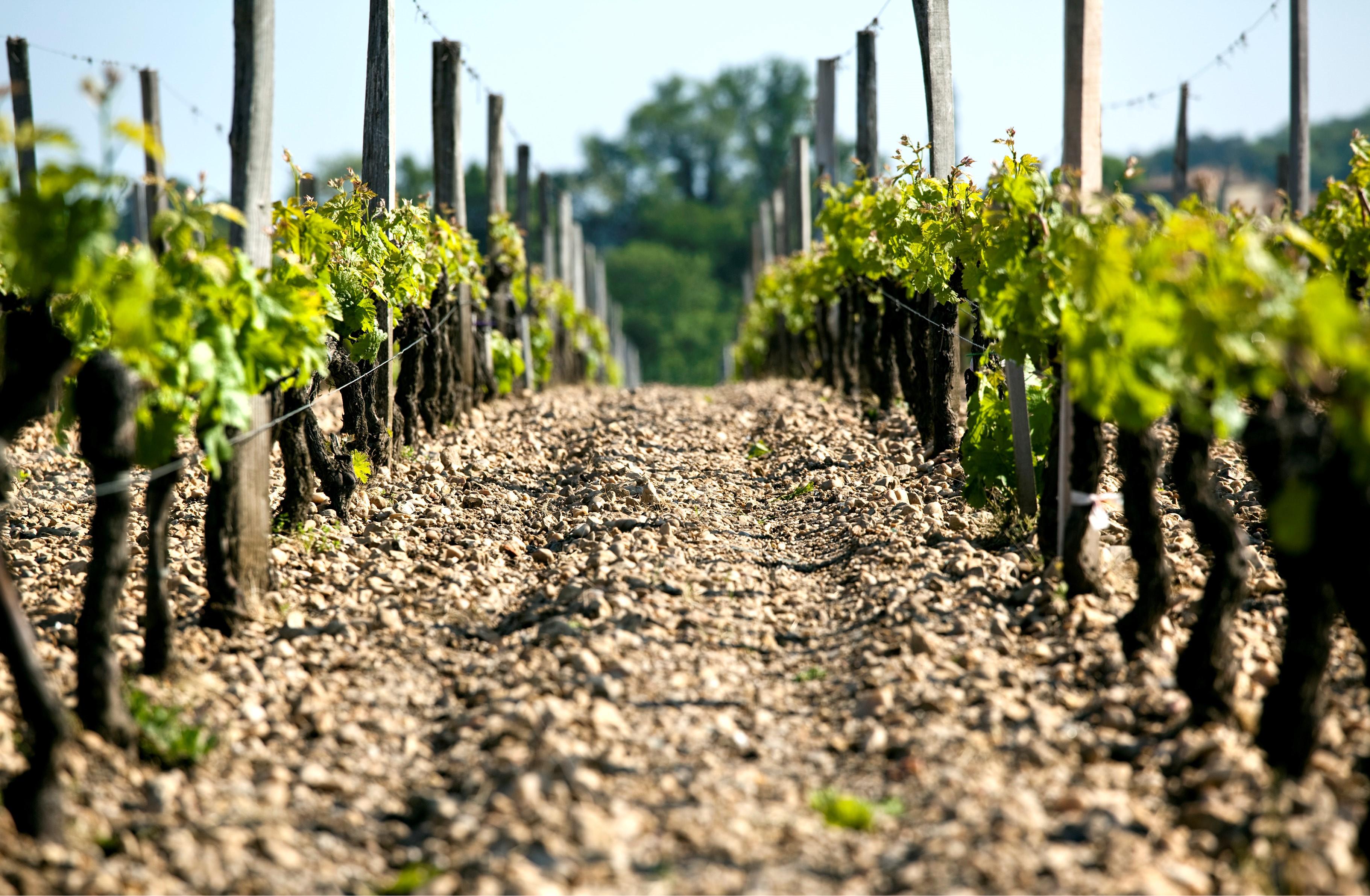 Gravel Soils in Fontenille Vineyards
