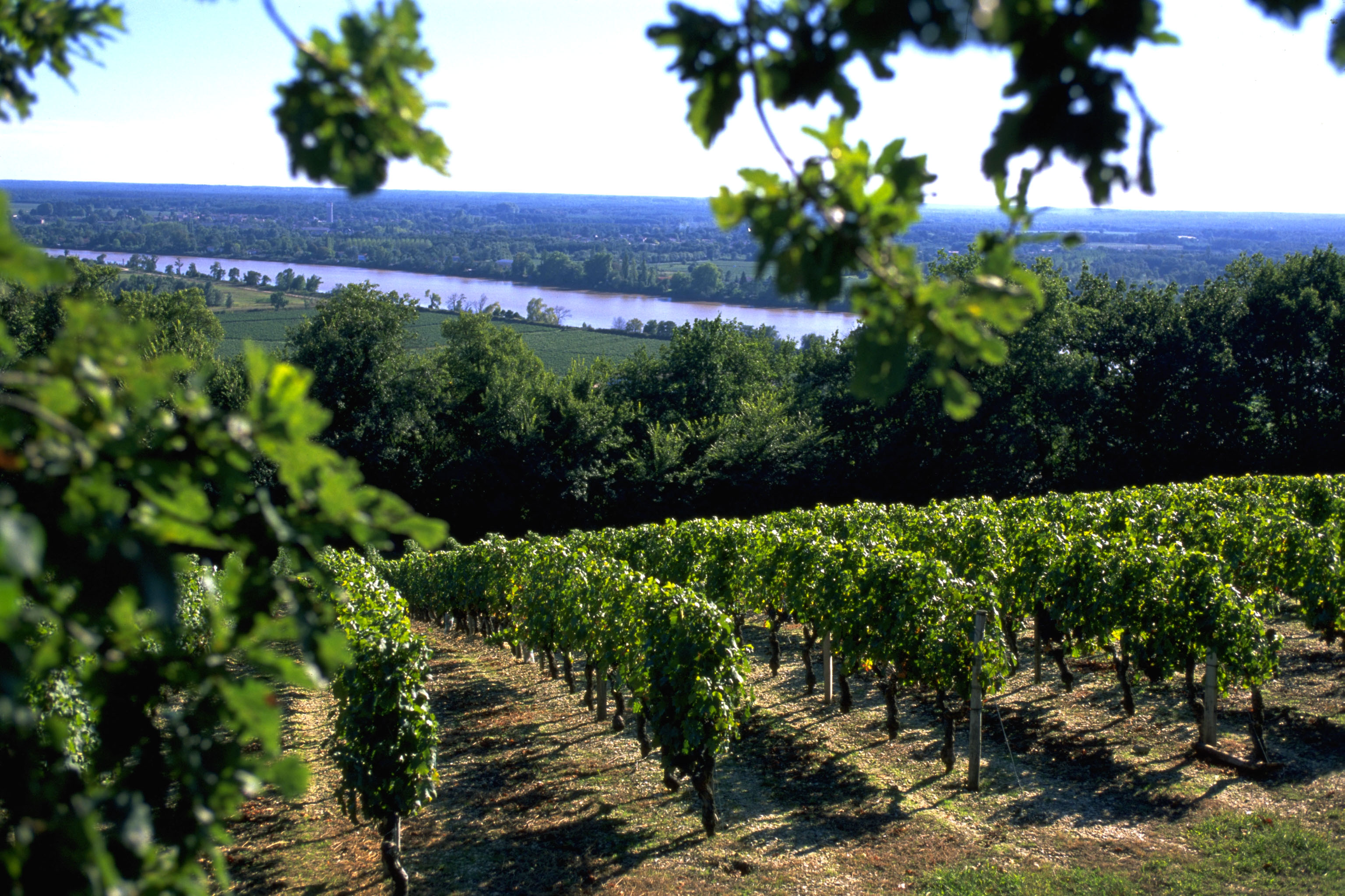 Gironde River View from Fontenille Vineyards