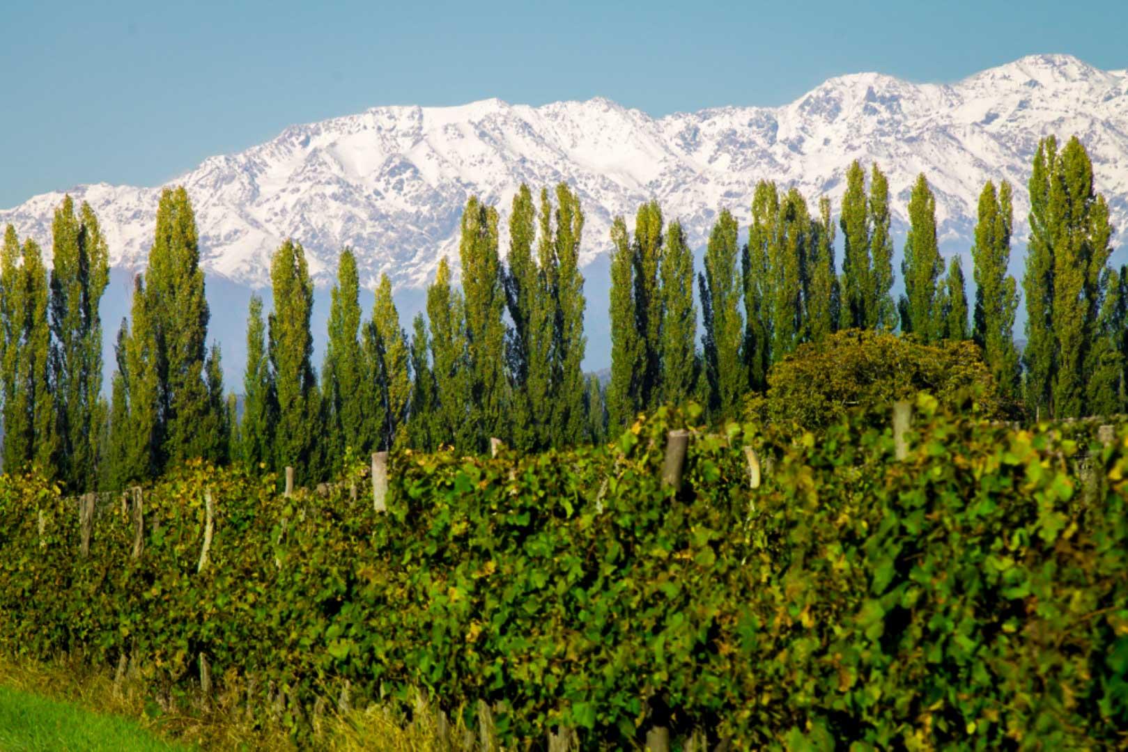 Luján de Cuyo mountain & vine