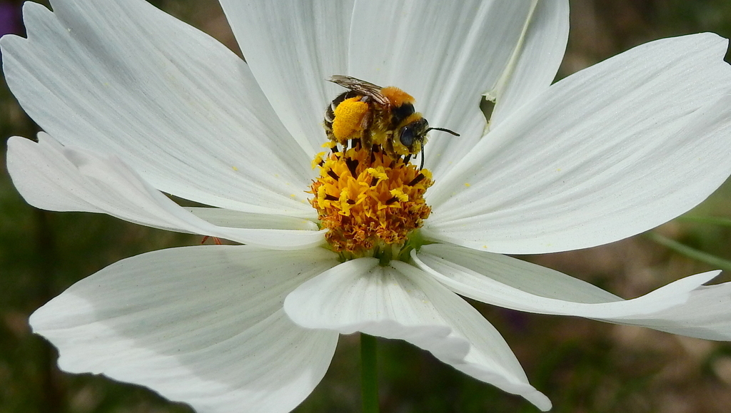 Wild Pollinator owned by Catena Zapata
